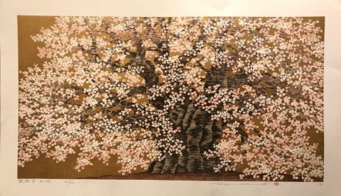Cherry blossoms of the Daigo